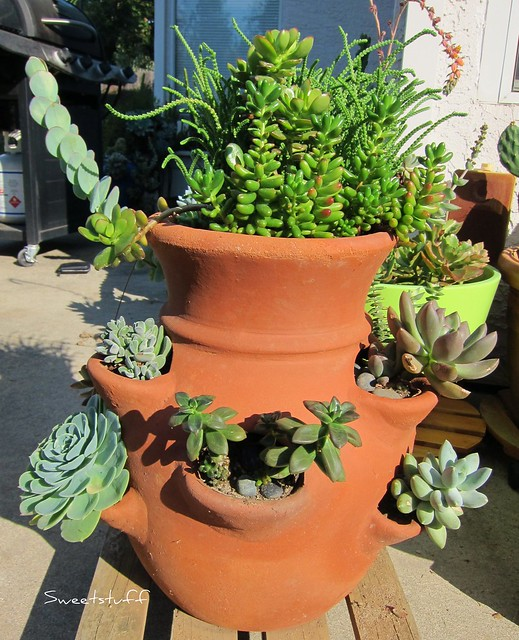 Succulent Flower pot side 1