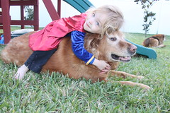 IMG_9094 (drjeeeol) Tags: dog pet love halloween beautiful face goldenretriever costume backyard hug sweet katie tiger superman superhero cape supergirl fav triplets toddlers monkee 2011 36monthsold