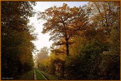 L'automne en Fort de Ferrires - Fall (Barbara DALMAZZO-TEMPEL) Tags: france fall automne oak herfst eik seineetmarne chne roissyenbrie sentierforestier fortdeferrires