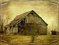 Old Kentucky Barn (MEaves) Tags: wood abandoned barn kentucky forgotten rusted weathered toned soe decayed textured antiquity disrepair ruralamerica k20d pentaxk20d pentaxart musictomyeyeslevel1