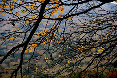 Holding On (johnshlau) Tags: autumn trees nature leaves japan autumnleaves autumncolors     tochigiken mygearandme mygearandmepremium mygearandmebronze mygearandmesilver mygearandmegold ringexcellence