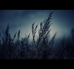Early Morning Mist (Photofreaks) Tags: laradphotography a2f24