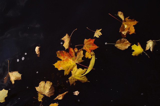 Autumn Leaves Black Water