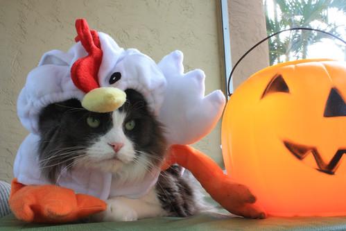 service chicken?
