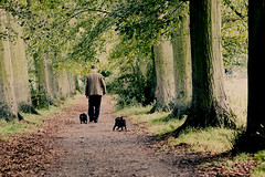 Williams Walk (Cathy G) Tags: winchester walk hampshire countryside green pugs william dogs canon canon40d 50mm canon50mm fiddy