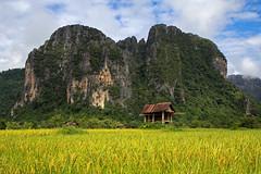 Hut in a paddy field (Peter Nijenhuis) Tags: mountains field rice paddy hut shack laos karst vangvieng 60d efs1755mmf28isusm peternijenhuis