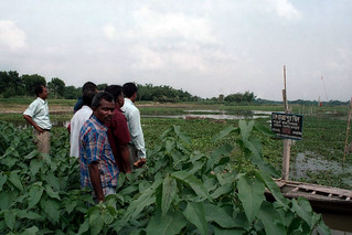Fish sanctuary, Bangladesh. Photo by Malcolm Beveridge, 2006