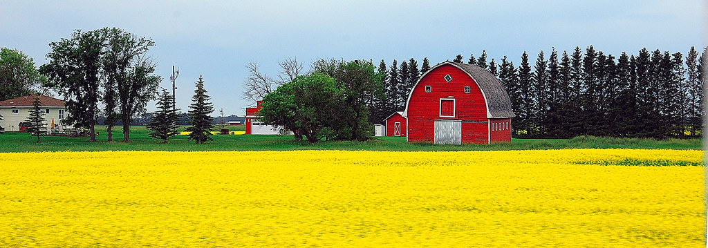Red Barn & Rapeseed
