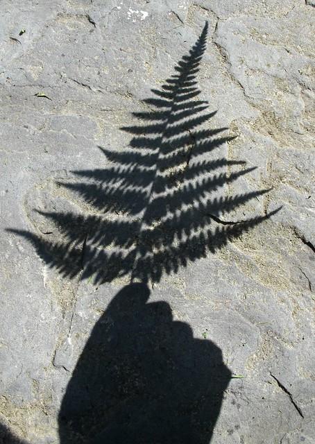 fern silhouette