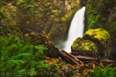 Wahclella Falls (Patrick Morris Photography) Tags: fern green oregon waterfall moss rocks falls idyllic columbiarivergorge rivendell logjam patrickmorris wahclellafalls muppas