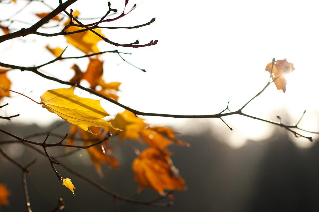 "Autumn in Goluchow / Poland ""11"