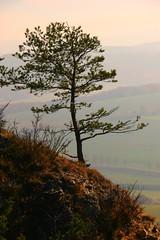 Hörselberg, Thüringen (Eifeelgood) Tags: autumn trees tree fall herbst indiansummer eifeelgood