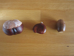 Chestnuts and acorn