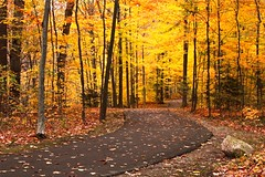 Another Golden Pathway (PhotoDocGVSU) Tags: autumn fall golden fallcolor pathways grandrapidsmi kenoshapark