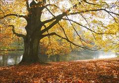 El jardn encantado (inmacor) Tags: park parque autumn red lake tree leaves yellow garden landscape hojas arbol lago rojo sombra paisaje amarillo otoo tronco roubaix ocres ltytr2 ltytr1