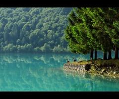 Lago di Barcis (Giuseppe Suaria) Tags: italy lake reflection tree water lago duck italia albero venezia giulia friuli oche valcellina anatre barcis