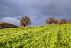 Trees in the Field [Explored] (nikolaos p.) Tags: trees green landscapes greece fields halkidiki     mygearandme mygearandmepremium mygearandmebronze mygearandmesilver mygearandmegold mygearandmeplatinum