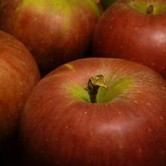 Apples (Dendroica cerulea) Tags: autumn food apple fruit newjersey nj highlandpark winesap rosales rosaceae maloideae fav10 middlesexcounty malusdomestica maleae