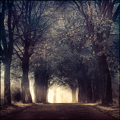 My kind of fairytale (wyrzykus) Tags: road morning mist fog mystery fairytale square alley poland polska droga aleja poranek mga warmia bajka kwadrat