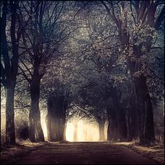 My kind of fairytale (warmianaturalnie) Tags: road morning mist fog mystery fairytale square alley poland polska droga aleja poranek mgła warmia bajka kwadrat
