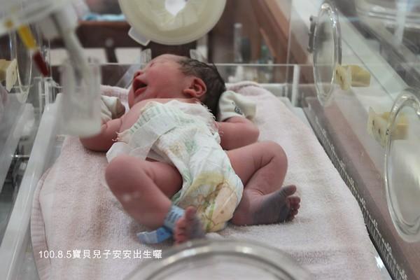 安安出生1