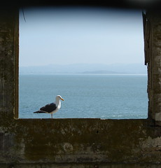 alcatraz from the inside out..... (ana_lee_smith) Tags: ocean sanfrancisco california travel blue sky lighthouse tree green broken window water glass yellow ferry clouds sailboat island photography freedom bay sailing tour escape view photos seagull seat horizon steps perspective cell tourist prison sail alcatraz cypress therock bleachers solitary audio cracked windowframe attraction 1946 jailhouse confinement federalprison guardtower nationalhistoricsite exerciseyard birdmanofalcatraz federalpenitentiary analeesmith 19331963 islandofpelicans alcatrazpictures thebattleofalcatraz TGAM:photodesk=shallowdof lookingformrstroud