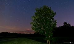 Rheintal Night (andreaskoeberl) Tags: longexposure sky lightpainting mountains tree night stars austria feldkirch lowlight nikon f28 starrynight vorarlberg 1116 d7000 tokina1116 nikond7000 andreaskoeberl