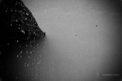 (Gabriel Junior) Tags: blackandwhite bw storm muro nature rain wall canon agua natureza chuva pb pretoebranco parede telha 60d canon60d canoneos60d