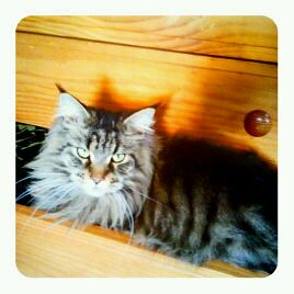 zeus sitting in the dresser drawer