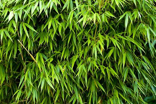 green garden bamboo