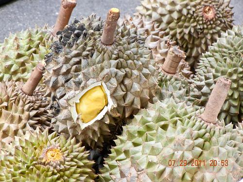 DSCN2105 Durian ,榴莲