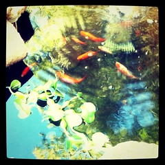 The fishies in our pond.