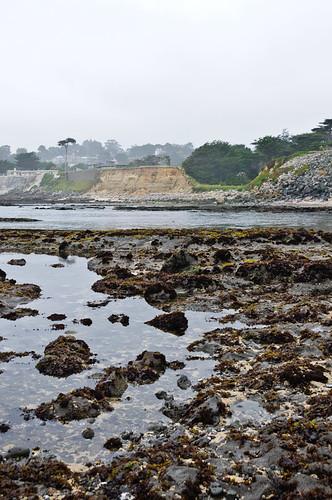 1106-SF&Monterey-2491