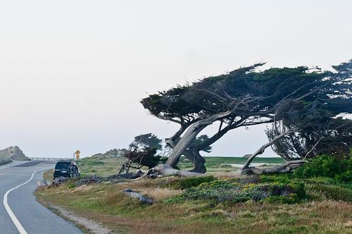 1106-SF&Monterey-3557