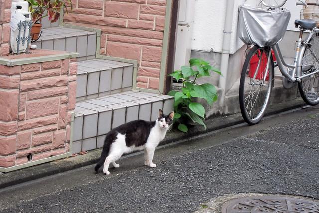 Today's Cat@2011-08-23