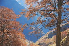 (.:: Maya ::.) Tags: mountain tree nature   balkan stara   planina        mayaeye  mayakarkalicheva  wwwmayaeyecom