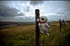Owl on t'moor (teddave) Tags: loss childhood fence sad pennineway bereft mrowl