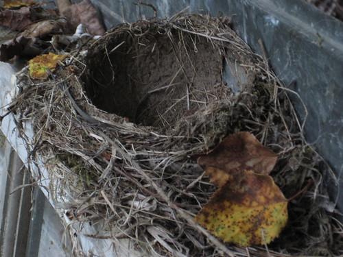 """Bird""""s nest"""