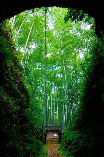 尾鷲の竹林[Explored]