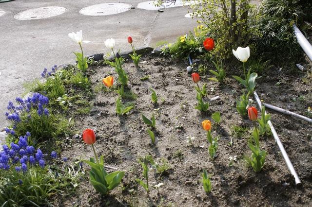 春はひと足ずつ 新緑の頃