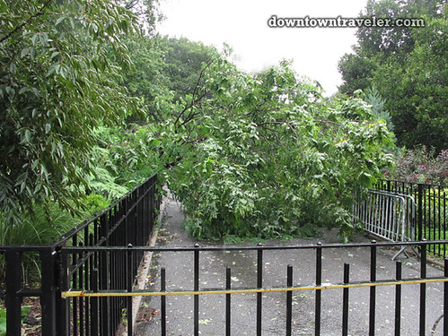 Aftermath of Hurricane Irene in NYC_Tompkins Square Park fallen tree 2
