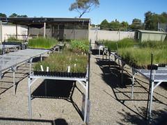 Clayton Bay Community Nursery and Garden