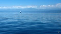 Bleues penses (MFEYE) Tags: france eau europe suisse lac bleu mf bateau lman rhone cgn 2011 d90 frontire mfeye