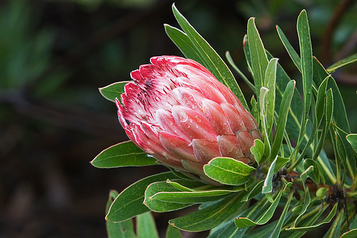 Maui County seeking vendors for Philadelphia flower show