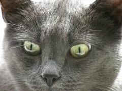 02 September 2011 (keepps) Tags: summer animal cat schweiz switzerland suisse september vaud nyon notmycat