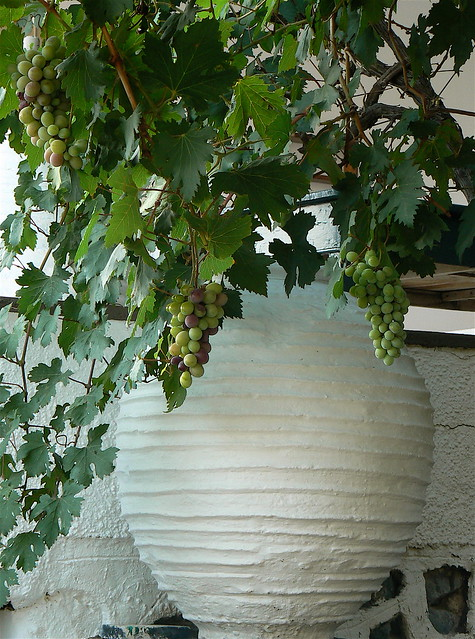 Urn and Vines