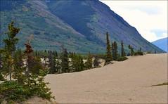 Klondike Highway - Carcross Desert (blmiers2) Tags: travel mountain canada mountains nature alaska landscape nikon desert carcross klondikehighway d3100 blm18 blmiers2