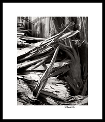 Splintered (BlakeSmithPhotography) Tags: white black tree canon lens photography smith trunk 5d blake mkii splintered 70200mm f28l blakesmithphotography