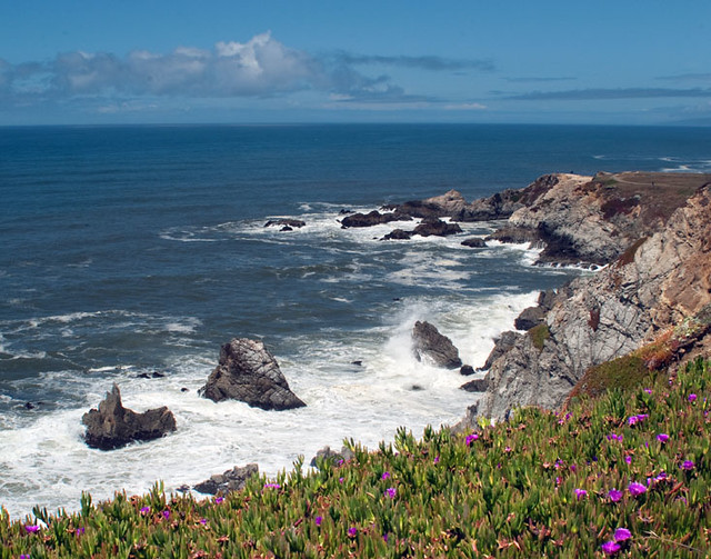 A view of the California Pacific coast looking out to sea over a wild bed of pink flowers.
