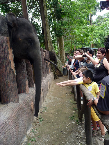 Kuala Gandah Elephant Sanctuary - getting friendly